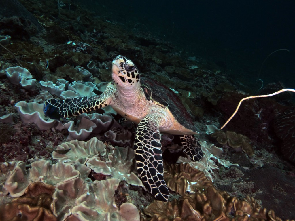Discover Scuba diving koh phi phi thailand groupers corner