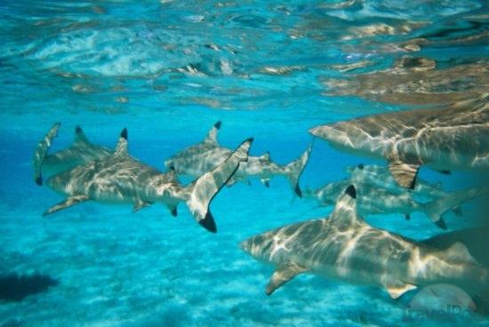 Shark Diving high season