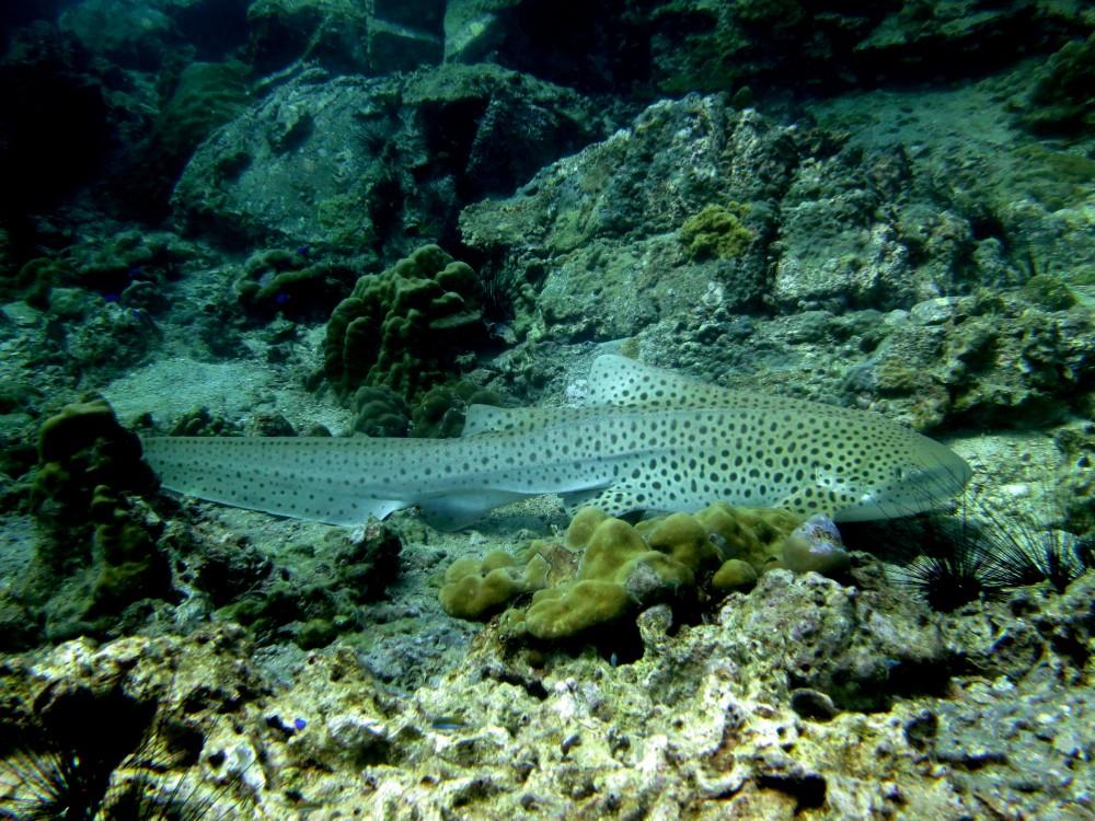 Phi Phi Shark Point