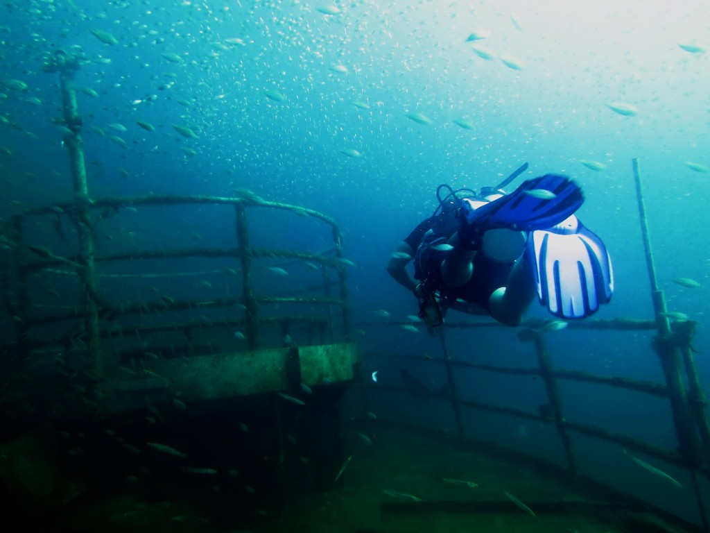 Kled Gaeow Wreck Diving Koh Phi Phi Thailand