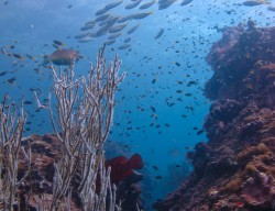 Palong diving, Koh Phi Phi, Thailand