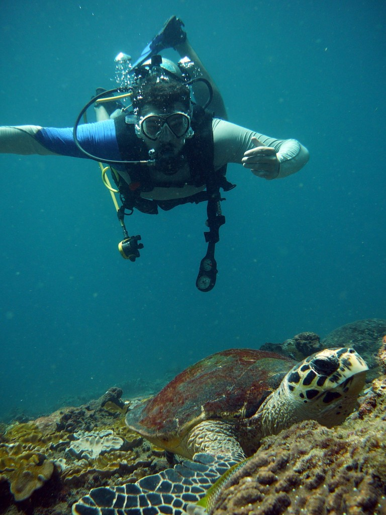 Diver and hawksbill turtle koh phi phi thailand