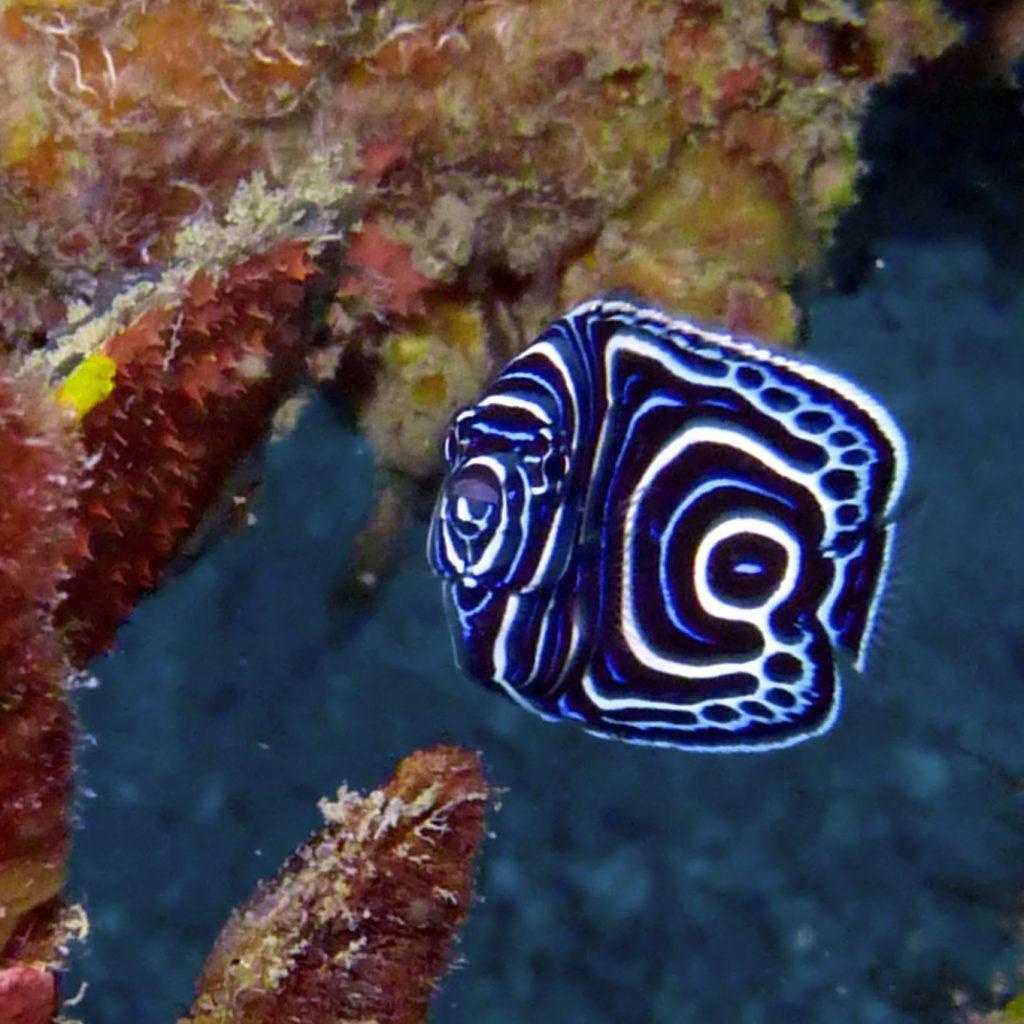 dive trips hin daeng koh phi phi, dive courses