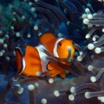 Discover scuba diving,,PADI specialty specality courses padi speciality