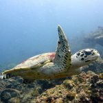 dive trips snorkeling turtle