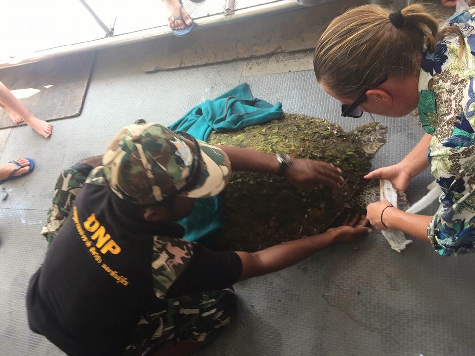 National Park Saving turtle phi phi island