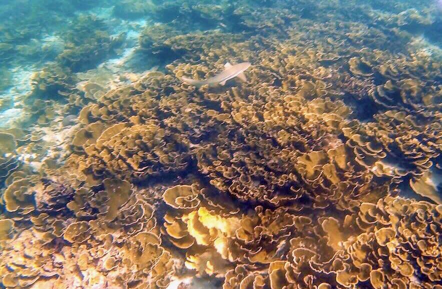 maya bay closing, coral restoration phi phi,