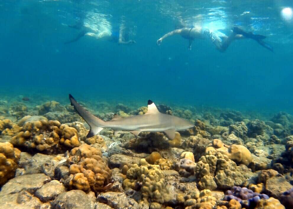 shark phi phi island snorkel phi phi