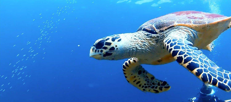 Dive Trips around Koh Phi Phi