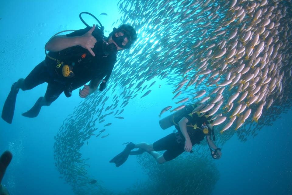 advanced open water diver fish awesome open water course phi phi