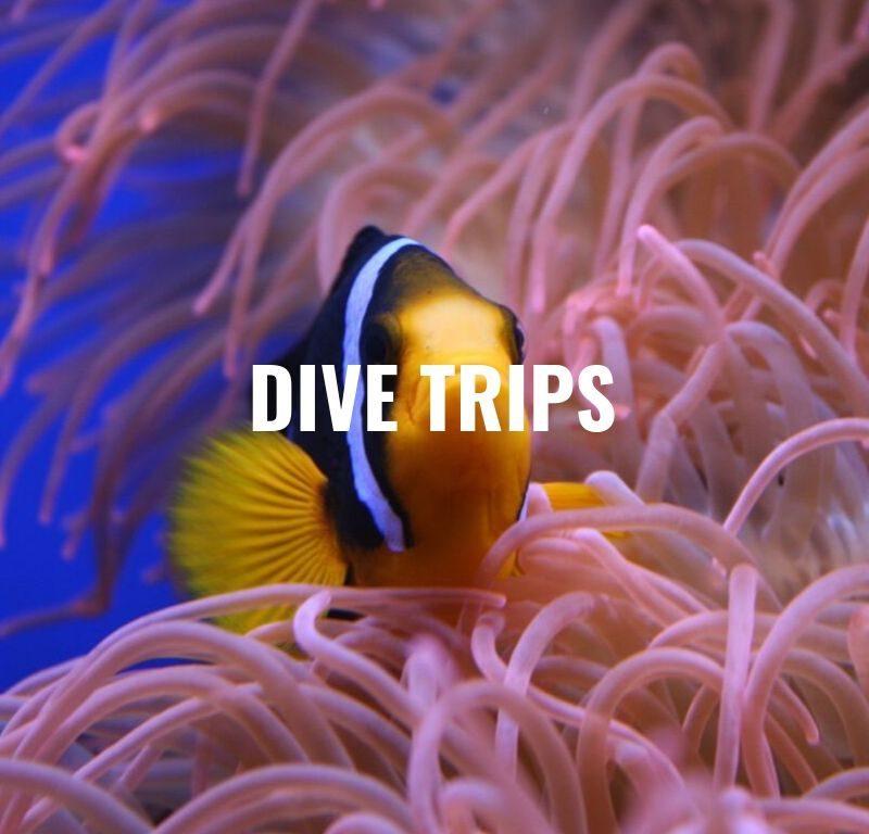 dive trips koh phi phi
