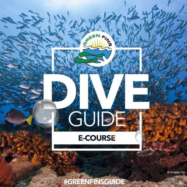 dive guide koh phi phi thailand