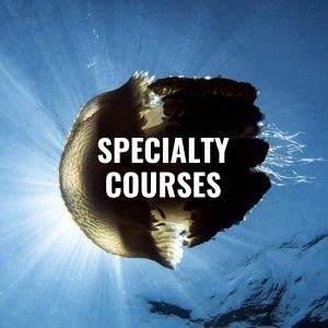 Speciality Dive Courses
