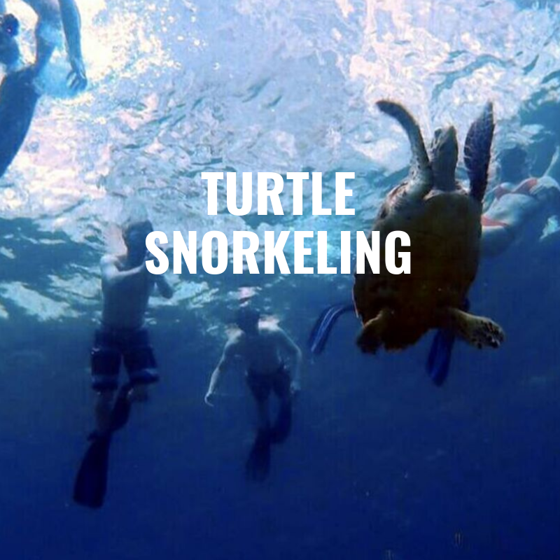 turtle snorkeling koh phi phi