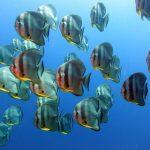 marine life phi phi