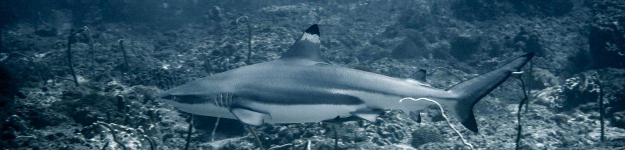 Divemaster on Phi Phi Island