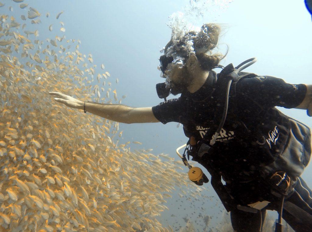 snapper fish divers phi phi island thailand