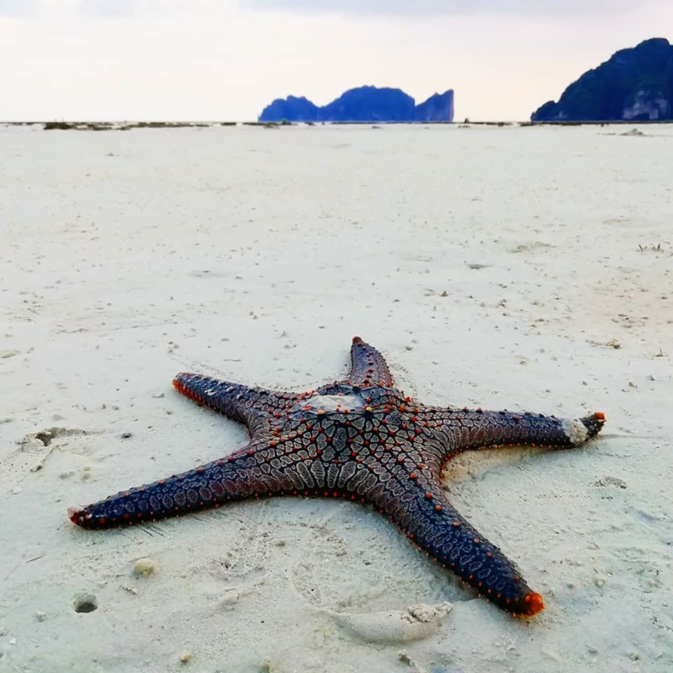 phi phi diving prices
