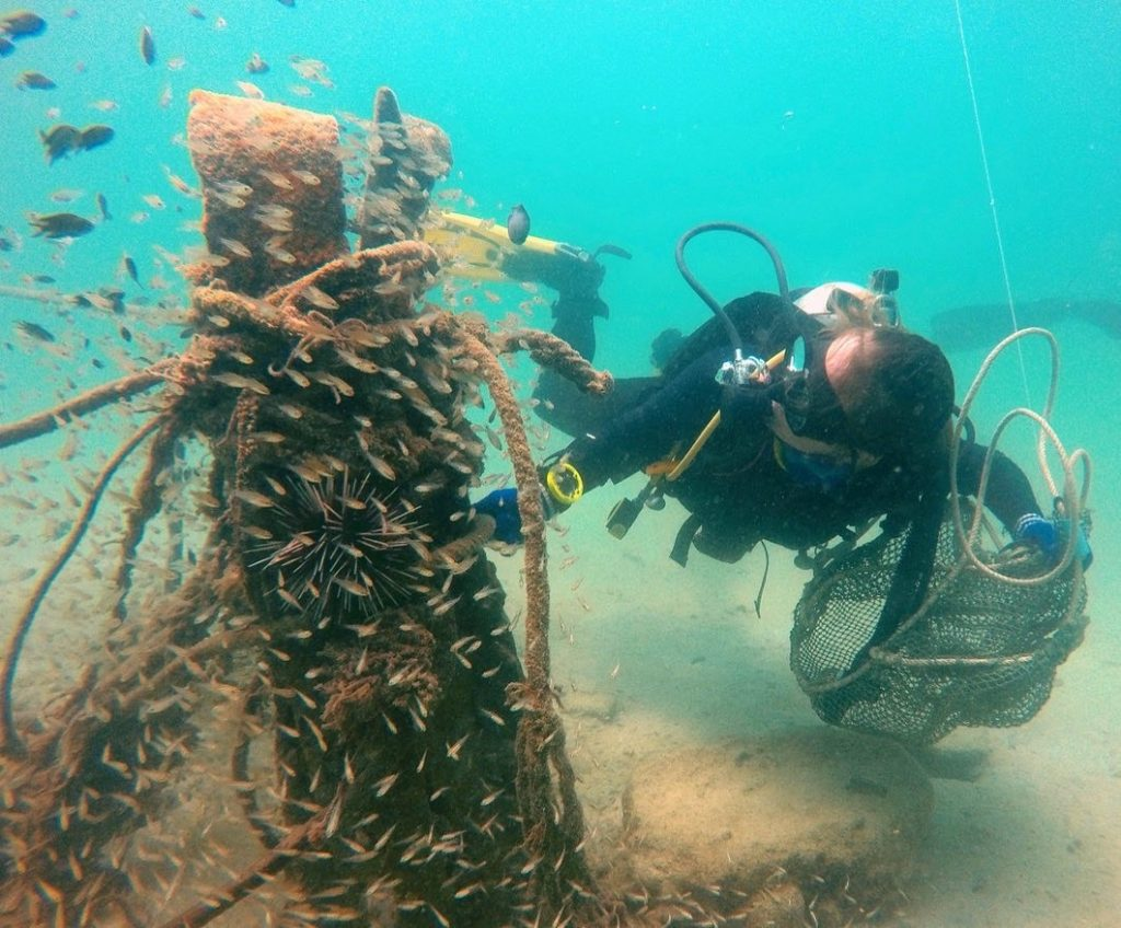 conservation dive