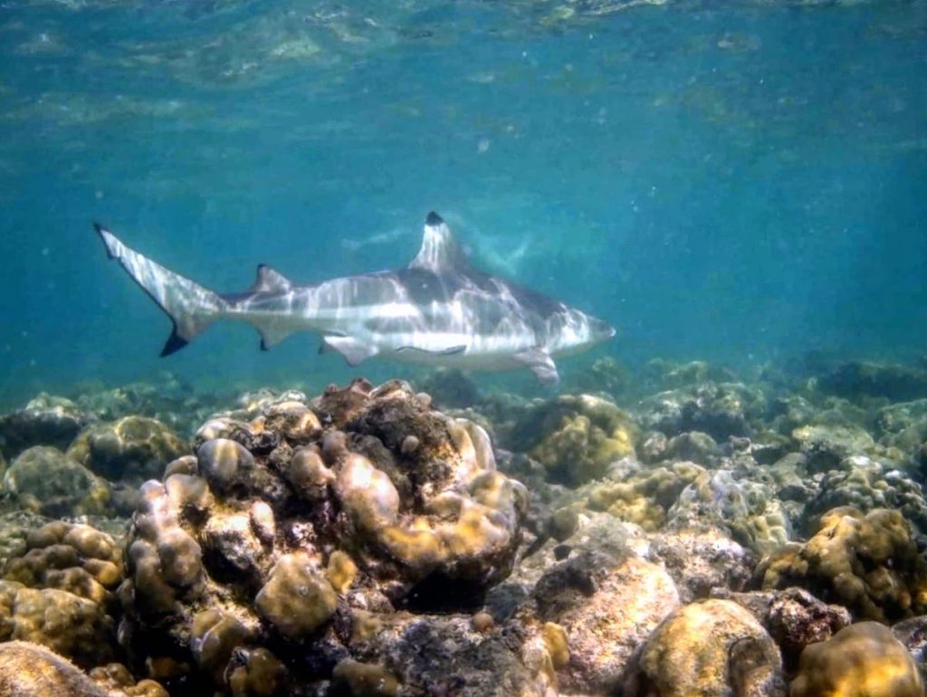 snorkel phi phi snorkeling eco trip