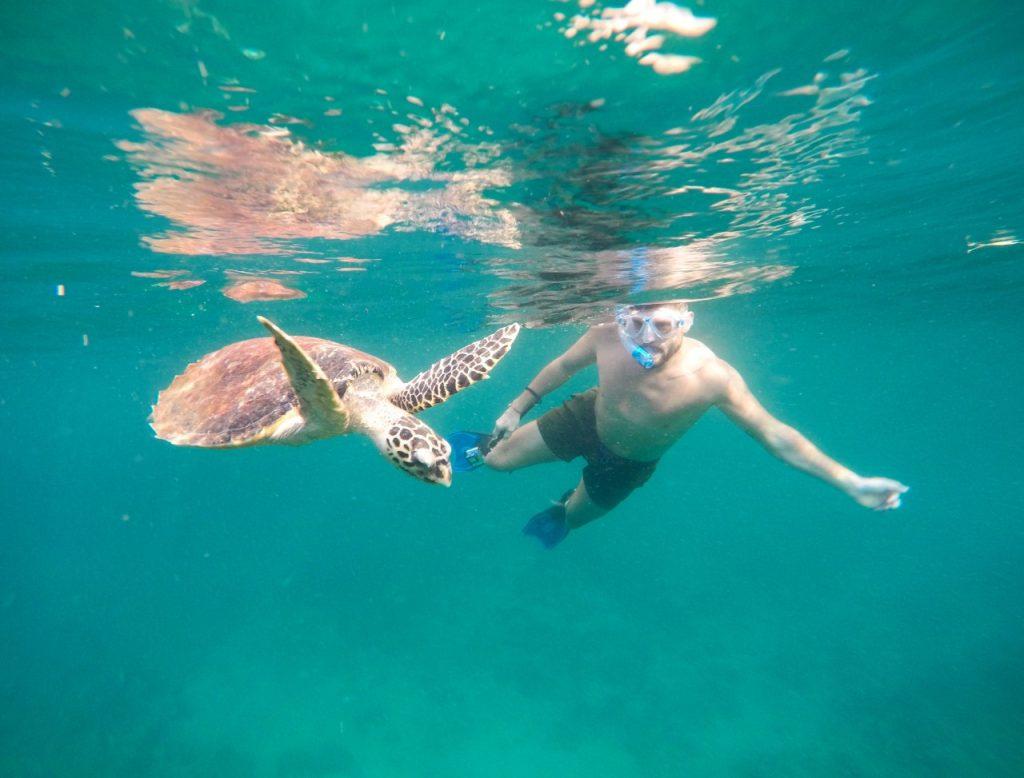snorkeling phi phi turtle koh phi phi