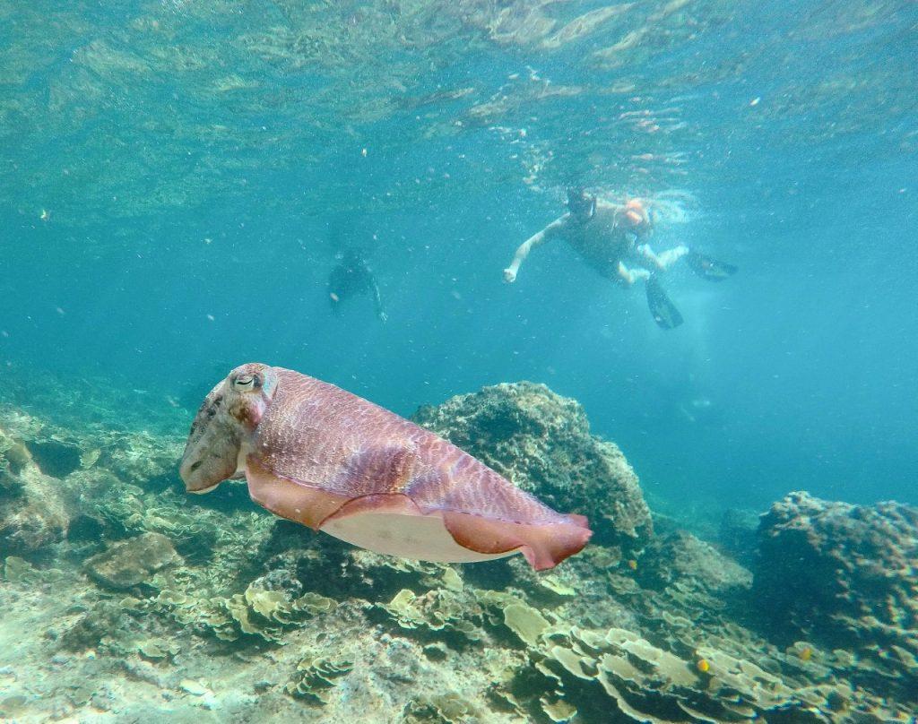 snorkel phi phi